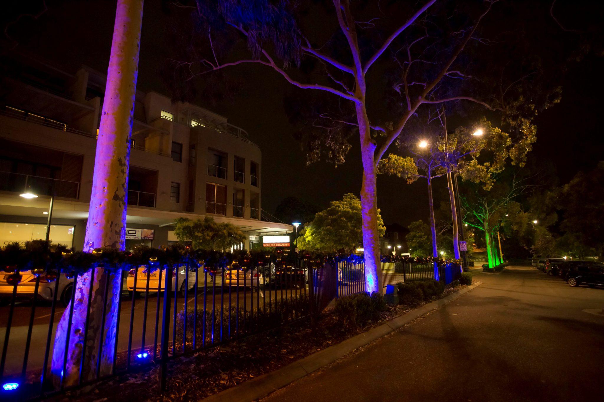 Gum tree light display at Majors Bay Road by Limelight Australia