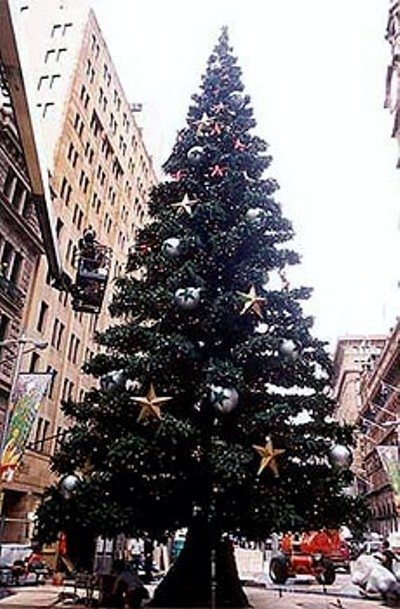 Martin Place Christmas Tree by Limelight Australia