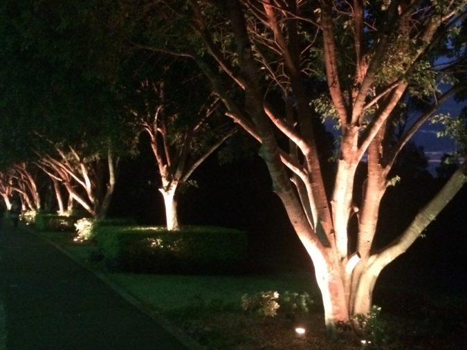 Tree spotlighting by Limelight Australia